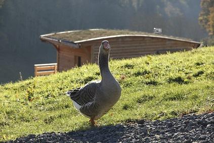 cabane eco-lodge dans le Puy-de-dôme en Auvergne